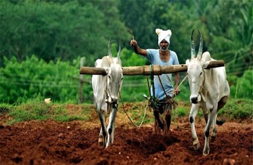 BJP Farmers Lok sabha Elections 2019